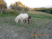 Pony Martina del Campanile